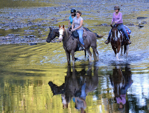 Camp-FigTree-Horse-Trail