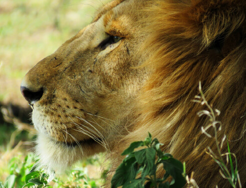 Activities and Safaris, Camp FigTree